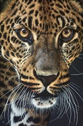 Leopard Watching II by Gina Hawkshaw - Original Painting on Stretched Canvas sized 24x36 inches. Available from Whitewall Galleries