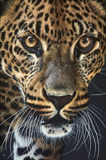 Leopard Watching II by Gina Hawkshaw - Original Painting on Stretched Canvas